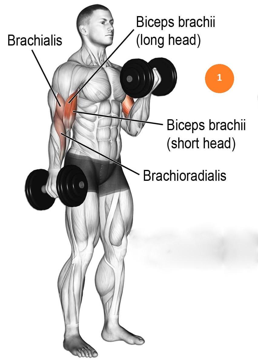 pumping Inner Biceps